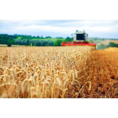 Уборка урожая и процесс подготовки полей для следующего сезона